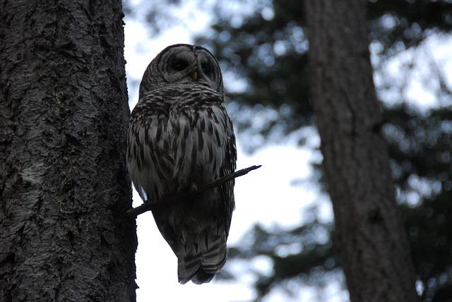 sova v lese na stromě